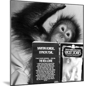 An Orangutan reading ghost stories by Staff