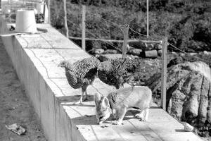 Desert Fox 1972 by Staff