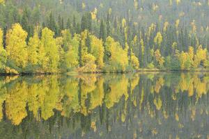 Mirrored Reflections by Staffan Widstrand