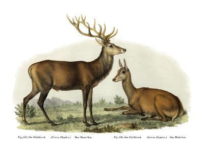 Stag, 1860--Giclee Print
