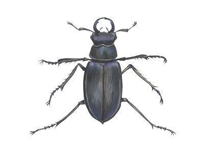 Stag Beetle (Lucanus Capreolus), Insects-Encyclopaedia Britannica-Art Print