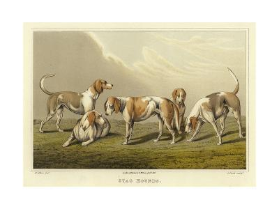 Stag Hounds-Henry Thomas Alken-Giclee Print