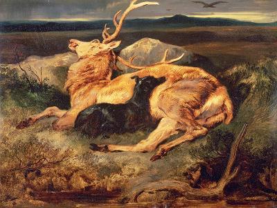 Stag-Edwin Henry Landseer-Giclee Print
