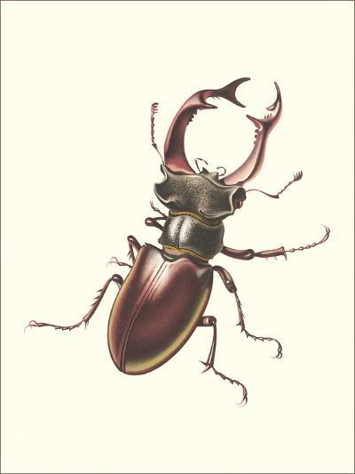 Staghorn Beetle-Found Image Press-Art Print