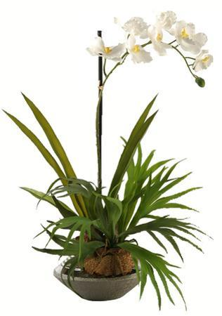 Staghorn Fern & Orchid Planter