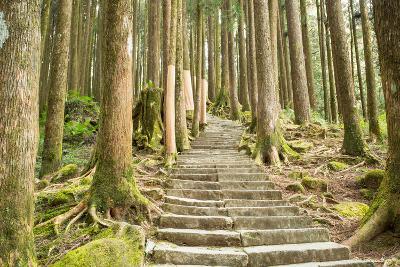 Stairway Alishan Forest- hin255-Photographic Print
