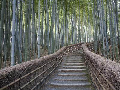 Stairway Through Bamboo Grove Above Adashino Nembutsu-Ji Temple-Brent Winebrenner-Photographic Print