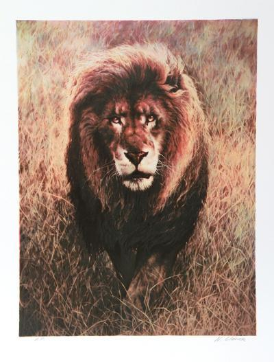 Stalking Lion-Nancy Glazier-Collectable Print