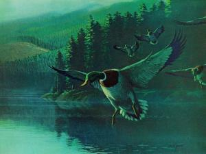 Mallard Duck by Stan Galli