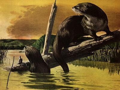 Otters Fear Forest Fire, 1952