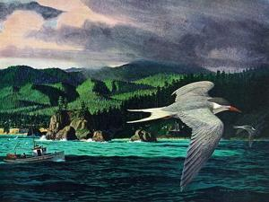 Terns In Flight by Stan Galli