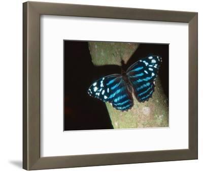 Tropical Blue Wave, Aviary Animal
