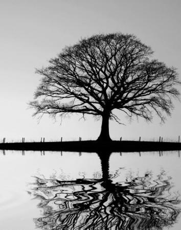 Standing Oak Tree