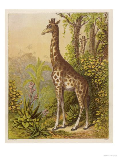 Standing Tall in the African Jungle--Giclee Print