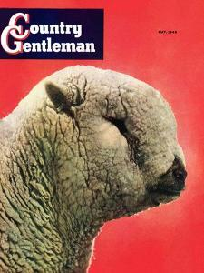 """Lamb,"" Country Gentleman Cover, May 1, 1948 by Stanley Johnson"