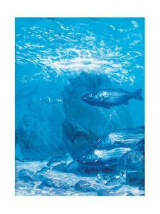 Block Island Bass, Study, Oil on Canvas by Stanley Meltzoff