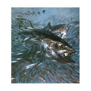 Busting Mackerel, 1980 by Stanley Meltzoff