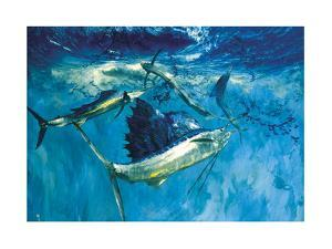 Five Leaping Sailfish: with their Sails Erect Sailfish Herd Bait into a Ball for Easy Pickings by Stanley Meltzoff