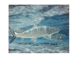 Four Bonefish Up with the Tide, 1972: Bonefish Cruise the Shallows Searching for Crabs in Sand by Stanley Meltzoff