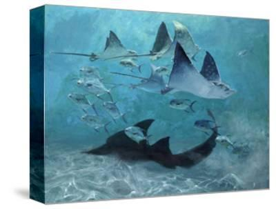 Four Eagle Rays, Shark and Permit School, 2000