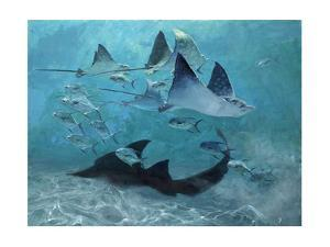 Four Eagle Rays, Shark and Permit School, 2000 by Stanley Meltzoff