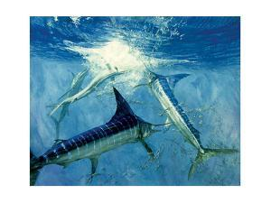 Four Leaping Striped Marlin and Pacific Herring: Striped Marlin Encircle a School of Herring by Stanley Meltzoff
