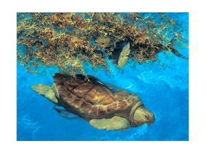 Loggerhead and Dolphins in Sargassum Sea, 2000 by Stanley Meltzoff