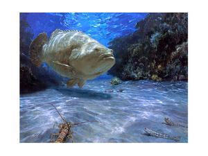 The Great Presence, 2001: a Massive Goliath Grouper Cruises its Rocky Habitat in Search of Food by Stanley Meltzoff