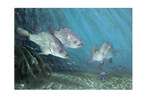 Three Snook in Mangroves, 2002 by Stanley Meltzoff