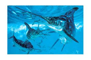 Three White Marlin and Mackerel by Stanley Meltzoff