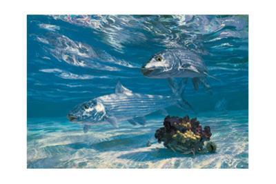 Two Bonefish and Coral Clump with Crab at Chub Bay by Stanley Meltzoff