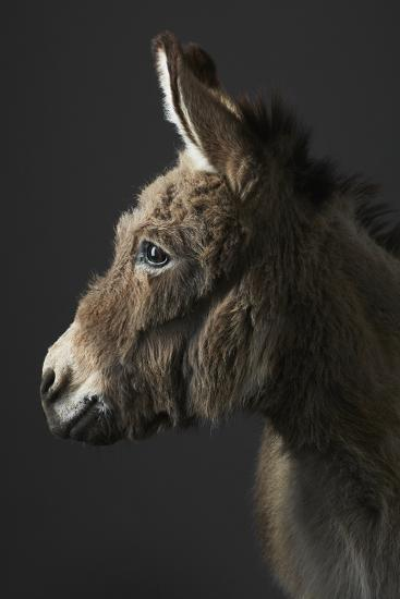 Stanley the Donkey-Peter Samuels-Photographic Print