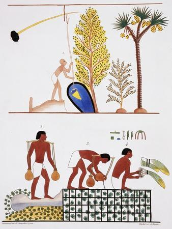 Illustration of Egyptian Frescoes of a Well and a Garden by Frederic Cailliaud