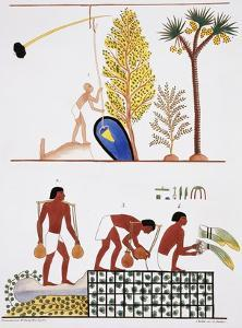 Illustration of Egyptian Frescoes of a Well and a Garden by Frederic Cailliaud by Stapleton Collection