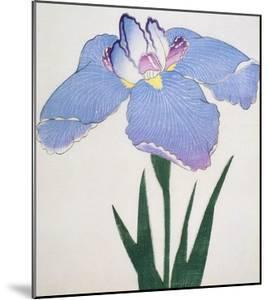 Kaku Jaku Ro Book of a Blue Iris by Stapleton Collection