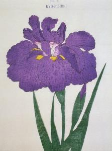 Kyo-Nishiki Book of a Purple Iris by Stapleton Collection