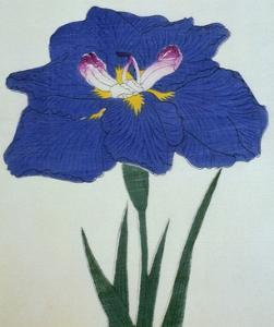 O-Sho-Kun Book of a Blue Iris by Stapleton Collection