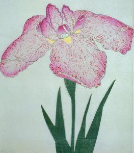 Tanka No-Koe Book of a Pink Iris by Stapleton Collection
