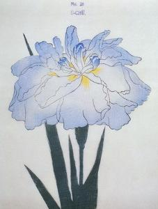 U-Chu Book of a Light Blue Iris by Stapleton Collection
