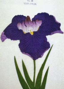 Yedo-Jiman Book of a Purple Iris by Stapleton Collection