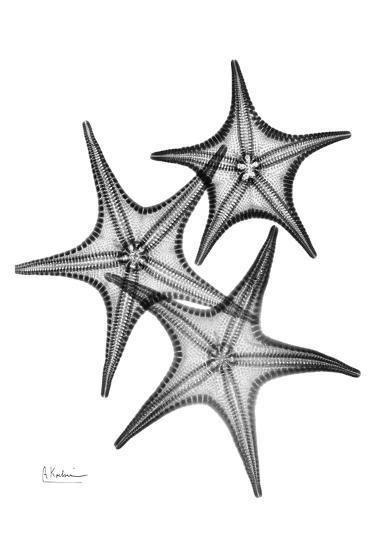 Star Fish Burst Triple-Albert Koetsier-Art Print