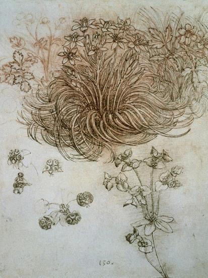 Star of Bethlehem, Wood Anemone and Sun Spurge-Leonardo da Vinci-Premium Giclee Print