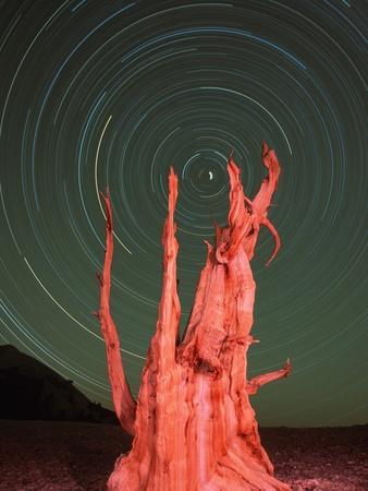 https://imgc.artprintimages.com/img/print/star-trails-and-bristlecone-pine-tree_u-l-pzkpwf0.jpg?p=0