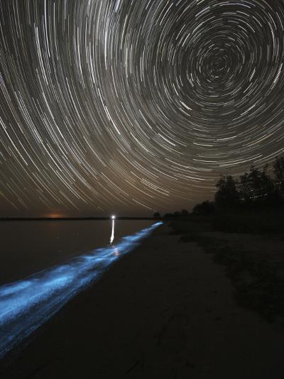 Star Trails over Bioluminescence in Waves on the Shores of the Gippsland Lakes, Australia--Photographic Print