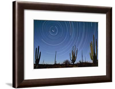 Star Trails Over Cacti-David Nunuk-Framed Photographic Print