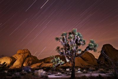 Star Trails over Joshua Trees and Granite Formations in the Desert-Ben Horton-Photographic Print