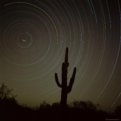 Star Trek Over Cacti, Tracing Stars as They Move Round North Star, Tucson, Arizona, USA-Tony Gervis-Photographic Print