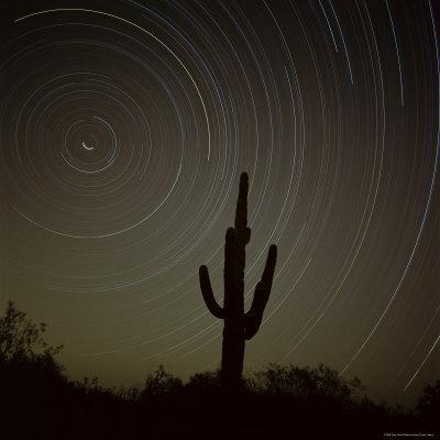 https://imgc.artprintimages.com/img/print/star-trek-over-cacti-tracing-stars-as-they-move-round-north-star-tucson-arizona-usa_u-l-p2qmut0.jpg?p=0