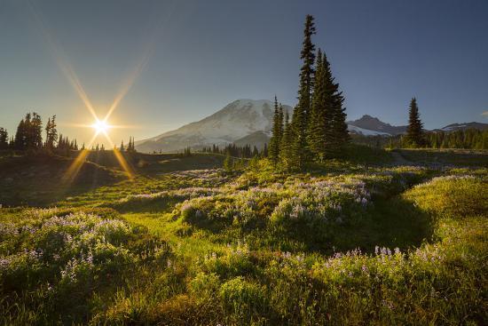 Starburst Setting Sun, Subalpine Wildflowers and Mt. Rainier at Mazama Ridge, Paradise Area-Gary Luhm-Photographic Print
