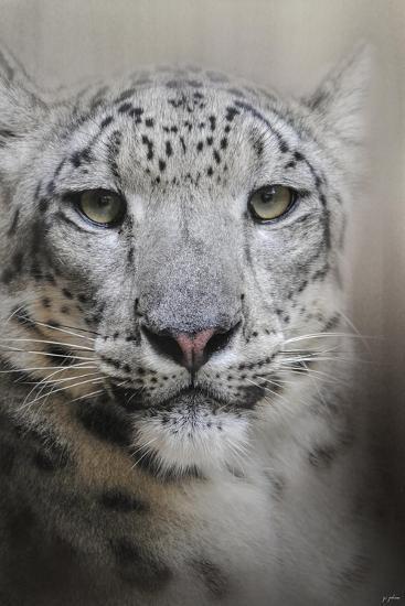 Stare of the Snow Leopard-Jai Johnson-Giclee Print